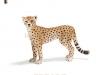 gepard-logopedichni-karti