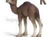 kamila-logopedichni-karti