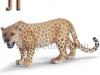 leopard-logopedichni-karti