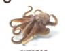 oktopod-logopedichni-karti