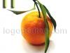 portokal-logopedichni-karti